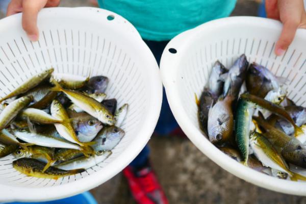 淡路島観光ホテルで釣った魚
